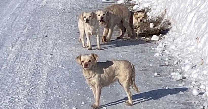 Новосибирские волонтёры спасли собак, выброшенных умирать на трассе под Шерегешем