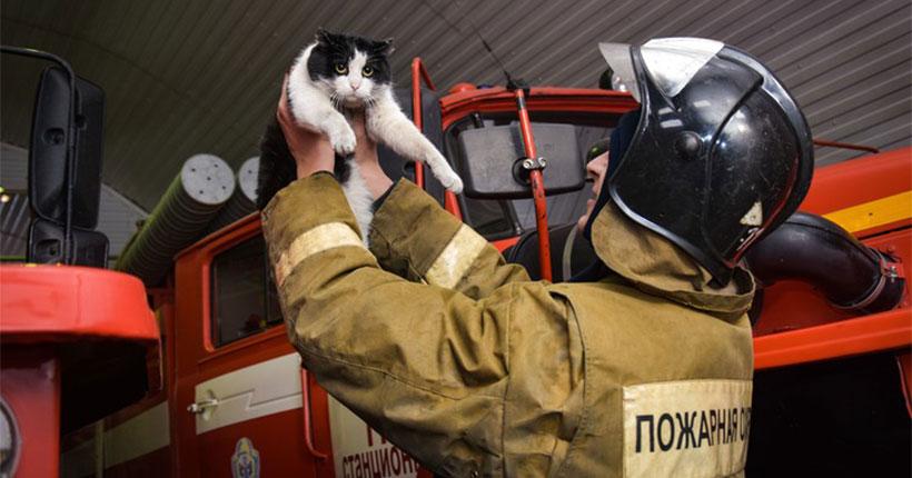 В День кошек новосибирские пожарные рассказали о спасённом ими котёнке