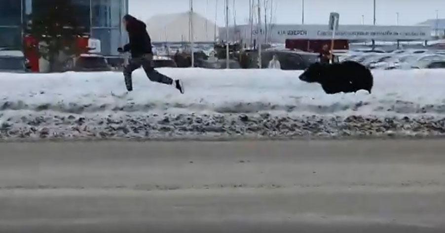 Жителей Новосибирска потрясла история с погоней медведя за мужчиной