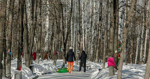 Новосибирцам предложили интересно и с пользой отпраздновать Международный день леса