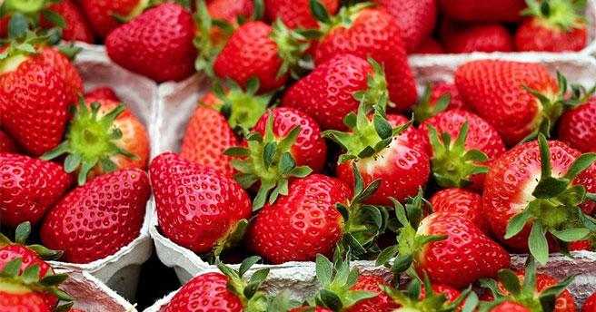 В Новосибирской области появилась вакансия сборщика ягод на полях Англии