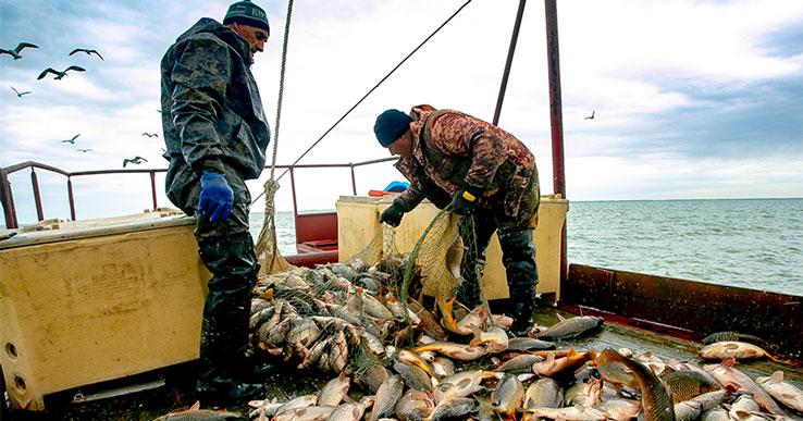 Европа тоннами скупает судака, окуня и щуку из Новосибирской области