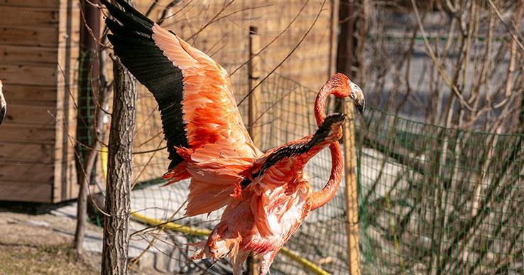 Только до 15 апреля: новосибирцы охотно делятся в социальных сетях фото с бесплатного посещения зоопарка