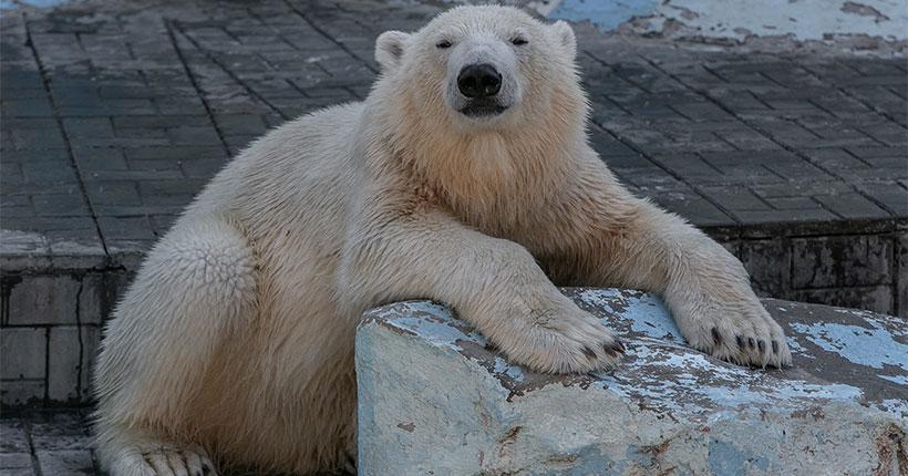 Новосибирский зоопарк продлил декаду пожилого человека до 27 апреля
