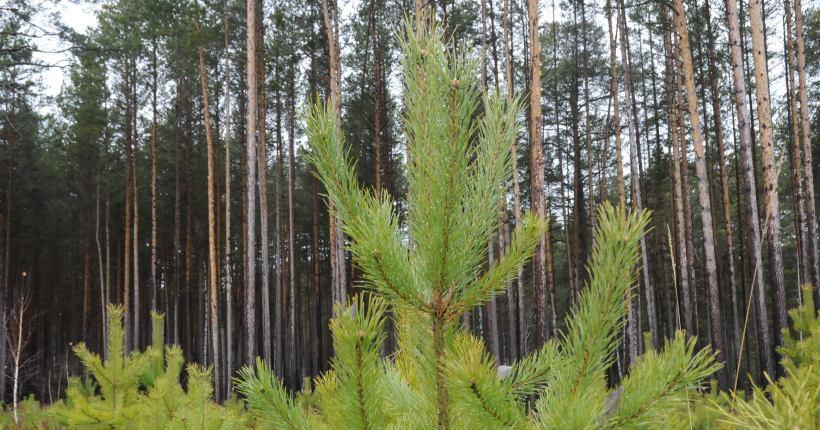 В Новосибирской области до конца года создадут две особо охраняемые природные территории