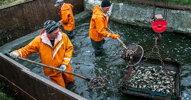 В Новосибирской области водоёмы от браконьеров защитят казаки