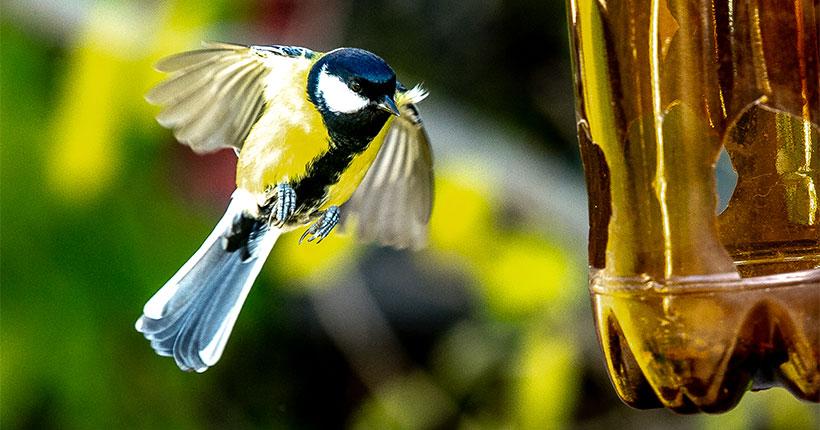 Нападает ли синица на других птиц: жителей Новосибирска пригласили на выставку  «Верю — не верю»