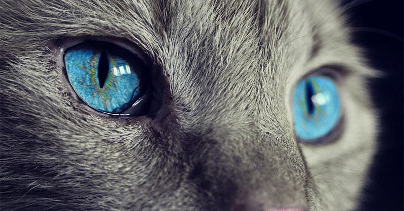 11 советов владельцам котов