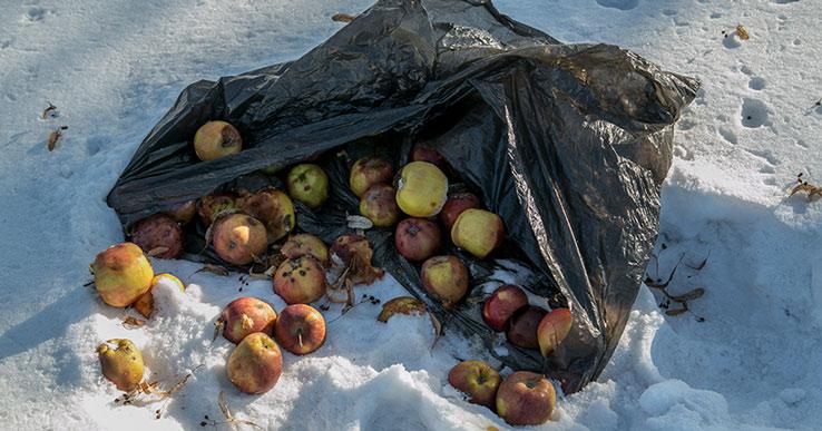 Из-за гор мусора в центре города прокуратура проверит «Экологию-Новосибирск»