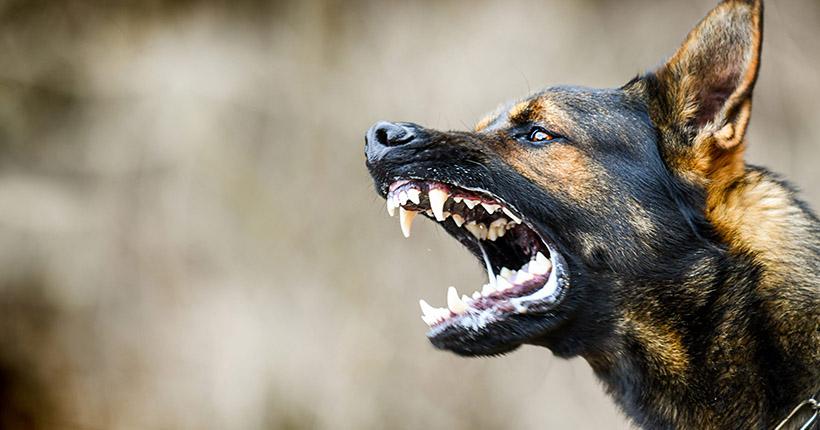 Собака покусала пятилетнего ребёнка в Бердске