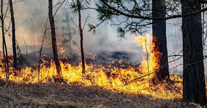 Пожароопасный сезон начинается в Новосибирской области