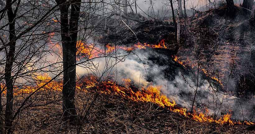Новосибирцам напоминают о штрафах за пал травы и разжигание костров