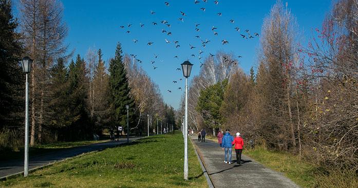 Парки и кладбища начали обрабатывать от клещей в Новосибирской области