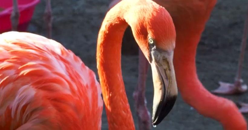Новосибирский зоопарк пригласил на декаду наблюдения за птицами