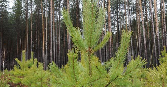 В управлении Роспотребнадзора по Новосибирской области сообщили о количестве  обратившихся с укусом клеща