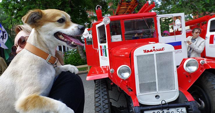Почти половина жителей Новосибирской области считают, что пожарная машина с трудом сможет въехать в их двор.
