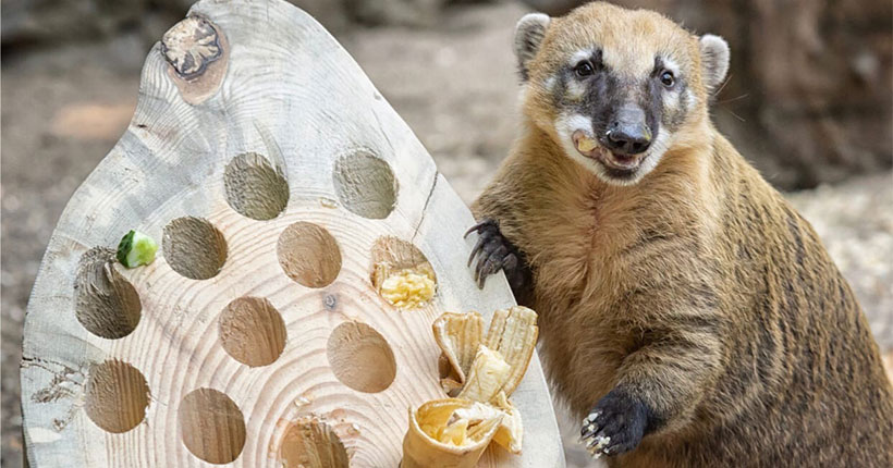 В Новосибирском зоопарке раскрыли тайну хорошего настроения животных