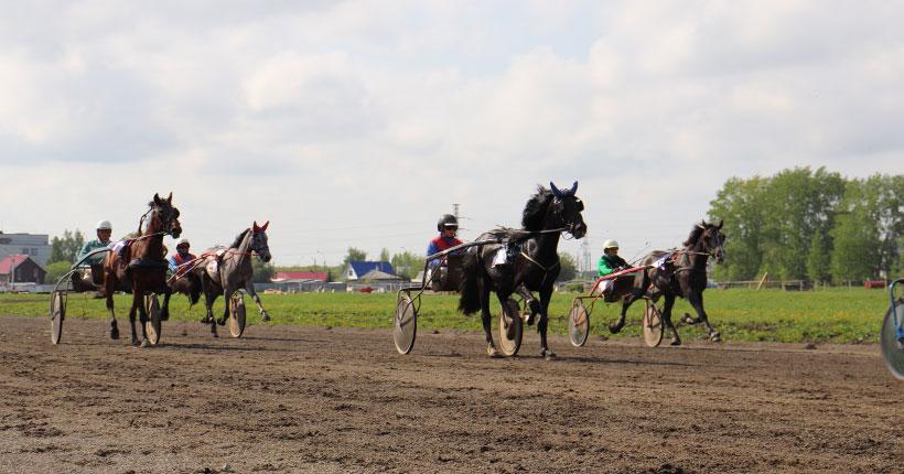 Наши кони быстро скачут