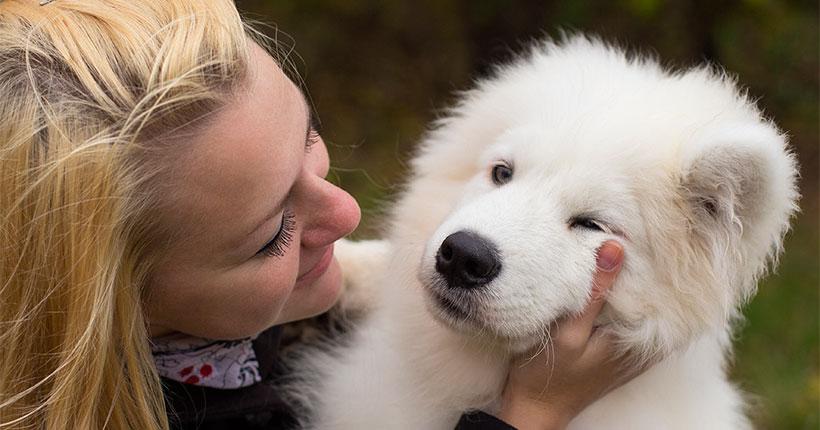 В мэрии Новосибирска рассказали о запрещённых местах для выгула собак