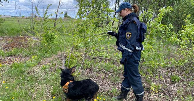 Спасатели и волонтёры двое суток прочёсывали леса в поисках пожилого грибника