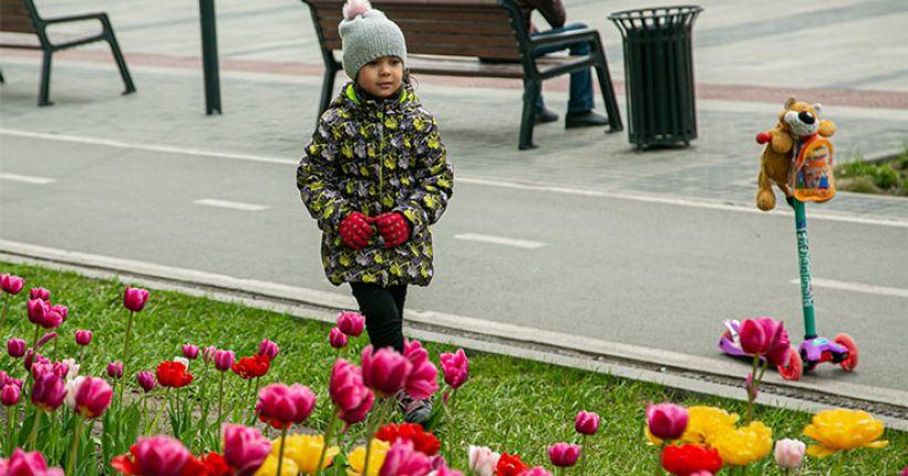 Прямая линия, посвящённая Международному дню защиты детей, будет проведена в Новосибирской области