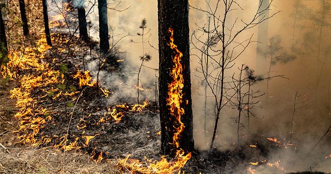 На авиационное патрулирование лесов в Новосибирской области выделят более 20 миллионов рублей