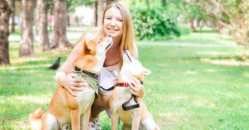 Новосибирцев пригласили сфотографироваться с красивыми собаками и поддержать приют