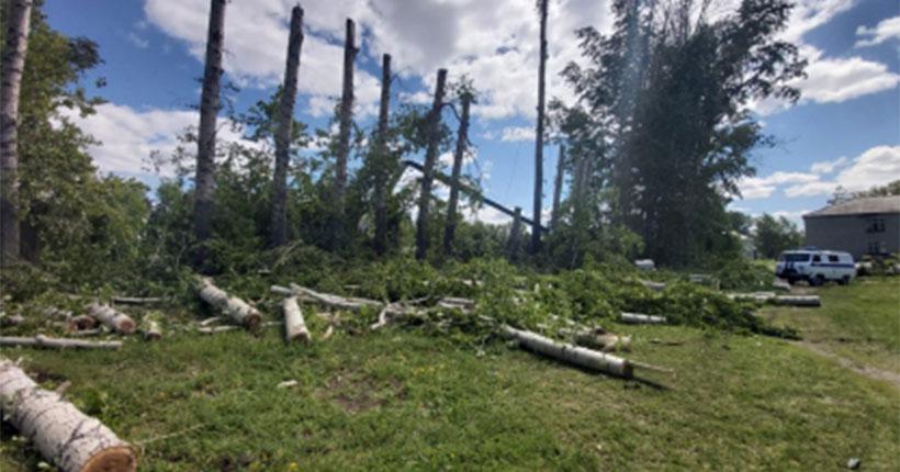 В Новосибирской области молодой мужчина погиб при обрезке деревьев