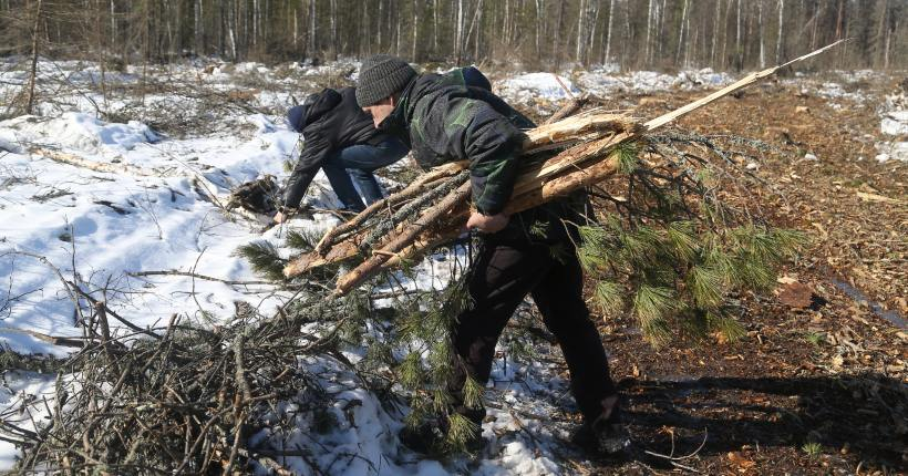 Депутаты новосибирского заксобрания выступили за ясность в вопросе с валежником