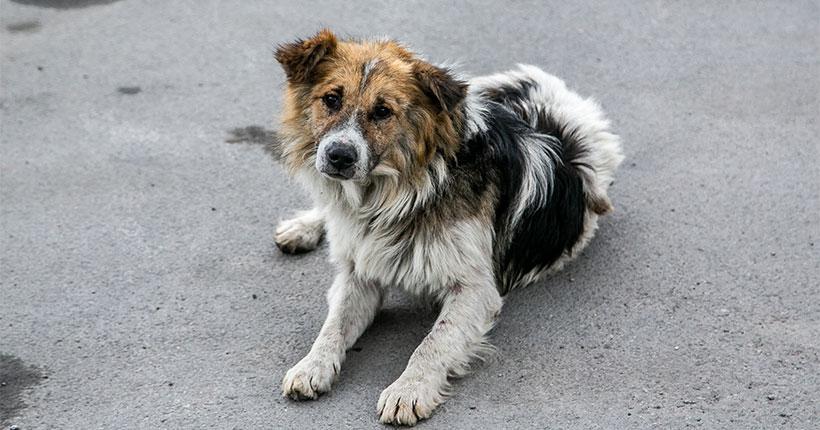 В Новосибирске будут усыплять бродячих собак