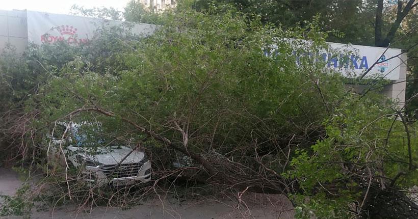 В Новосибирске огромный тополь упал на крыльцо ветклиники