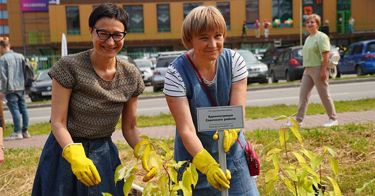 В Новосибирске появилась Золотая аллея из редких пород деревьев с жёлтыми листьями
