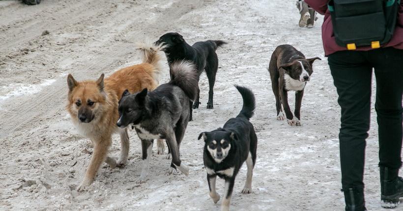 Новосибирская область готова стать пилотом в строительстве приютов для животных