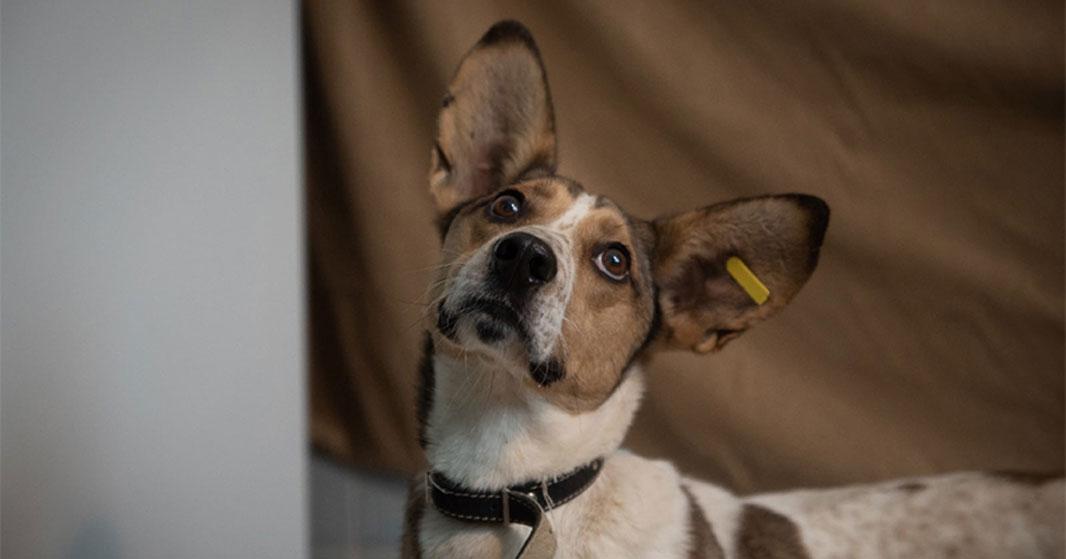 Проект «Варежка»: собаки смогут обрести дом и лучших в мире хозяев
