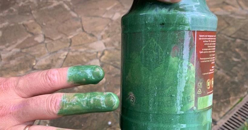Общественники бьют тревогу: получены результаты лабораторных испытаний проб зелёной жижи из Берди