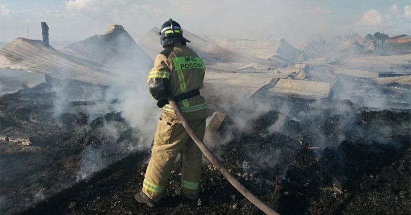 Ферма со стадом телят сгорела в Новосибирской области