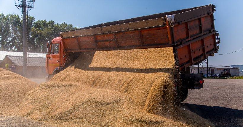 Новосибирские аграрии почти в 1,5 раза увеличили экспорт своей продукции