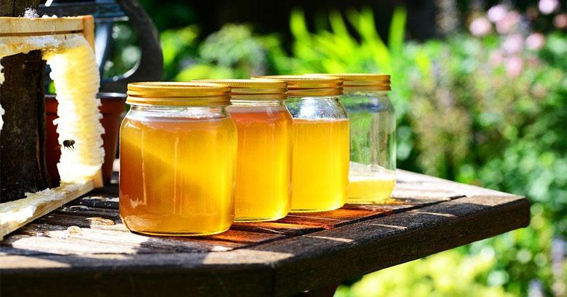 Мёд, грибы, орехи, травы: III Сибирский форум пчеловодства пройдёт в Новосибирске