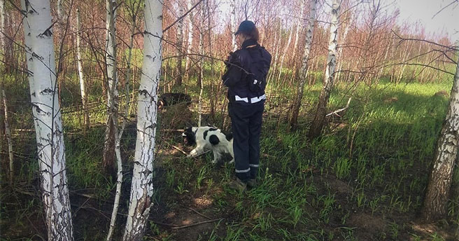 Пять человек заблудились и пропали за неделю в новосибирских лесах
